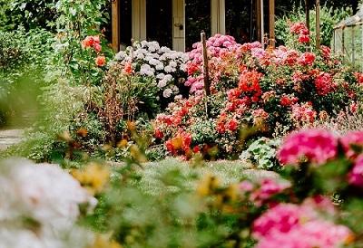 okrasne grmovnice na vrtu