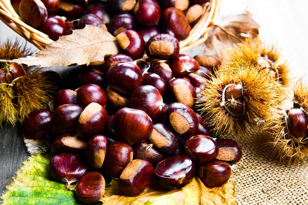 kostanj maron plodovi