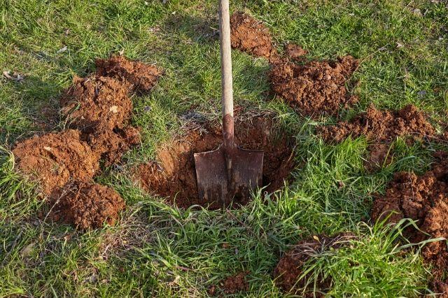 sadilna jama