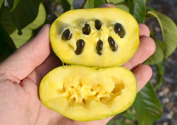 asimina sadež