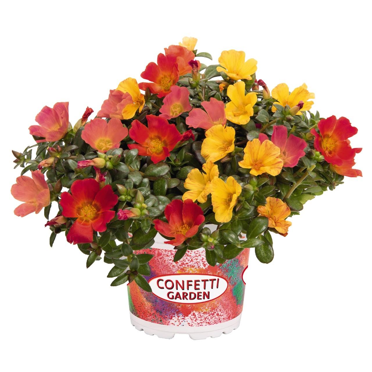 Confetti Garden Cupcake Party