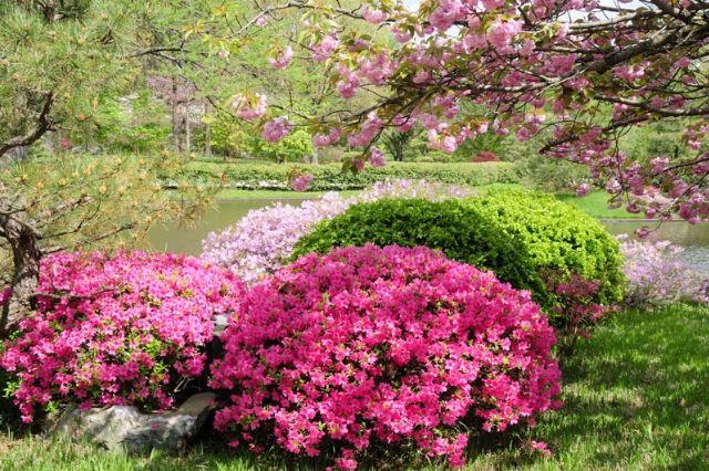 okrasni vrt cvetoče grmovnice