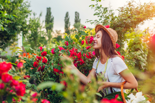 vrtnice na vrtu