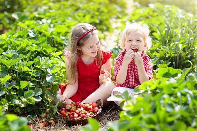 nabiranje jagod otroci
